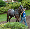 Charged Cotton in the paddock before The Rosenna Stakes at Delaware Park on 8/17/13