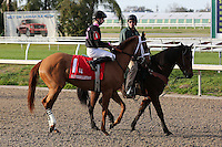 January 17, 2015: I'm a Chatterbox (KY) with Florent Geroux in the Silverbulletday Stakes at the New Orleans Fairgrounds course. Steve Dalmado/ESW/CSM