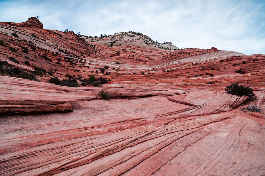 The colorful undulating lines and layers present a clean colorful field in Zion National Park's Navaho Sandstone.