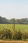 2014-09-28 Tonbridge Half 24 RH