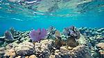 Reef, Roatan