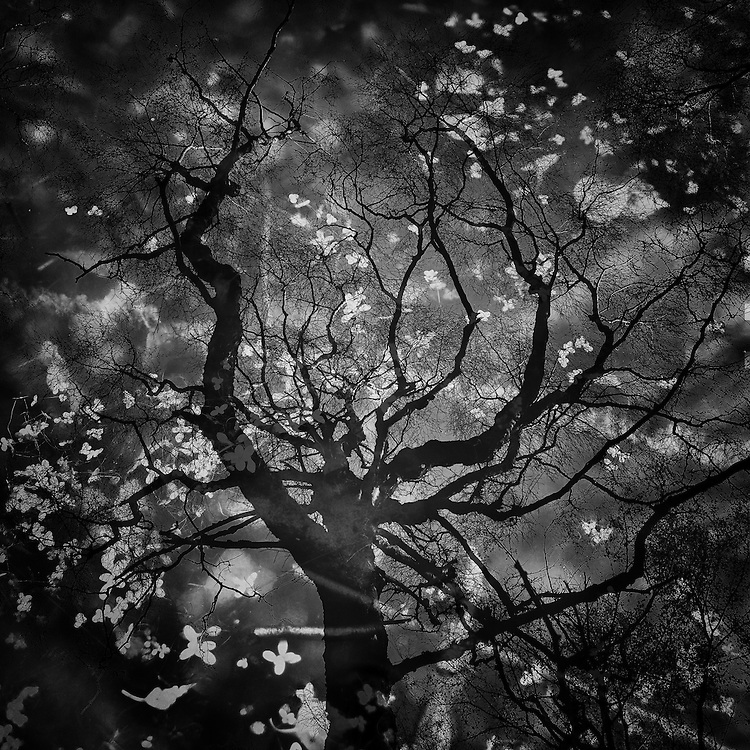Dark Pool reflection of Forest, Bolehill Quarry, Peak District, UK