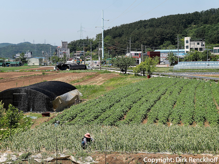 Landwirtschaft bei Daegu, Provinz,Gyeongsangbuk-do , S&uuml;dkorea, Asien<br /> agriculture  in Daegu,  province Gyeongsangbuk-do, South Korea, Asia