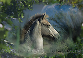 Bob, ANIMALS, horses, photos, GBLA3034,#a# Pferde, caballos