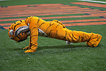 September 05 2009   The Missouri Tiger mascot does pushups for every point on the scoreboard after his team scored.    The University of Missouri hosted the University of Illinois in the annual Arch Rivalry Football Game at the Edward Jones Dome in downtown St. Louis on September 5, 2009.  The Mizzou Tigers won, 37-9...            *******EDITORIAL USE ONLY*******