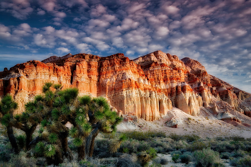 Colorful cliffs and clouds with Joshua tree. Red Rock Canyon State Park. California