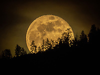 A stunning photograph of a SuperMoon rising over the treetops. This is a Landscape Art Print Photograph of a Moonrise over the Monashee Mountains in British Columbia Canada.