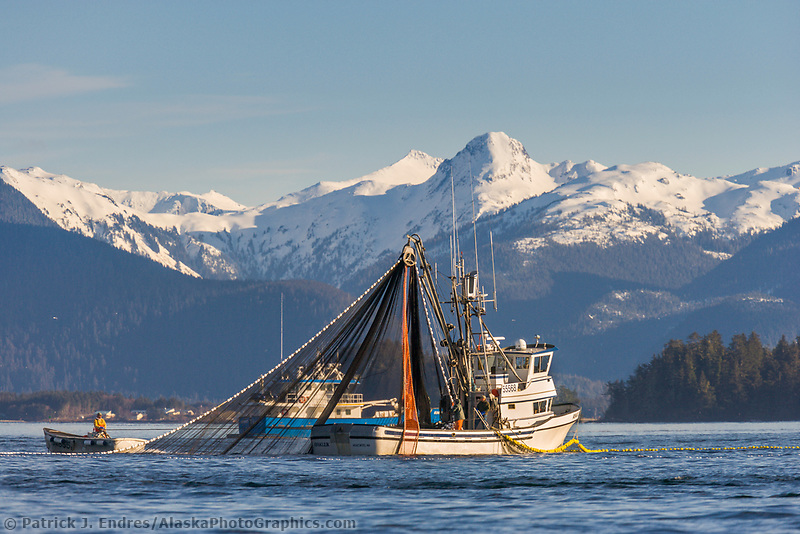 Cape purse seining commercial fishing vessel Ayakulik participates in the first 2006 Sitka Sac Roe Herring fishery opener on the north side of Middle island in Sitka Sound, March 2006.