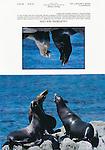 Marine Wildlife.  5x7 Notecards. Frank Balthis