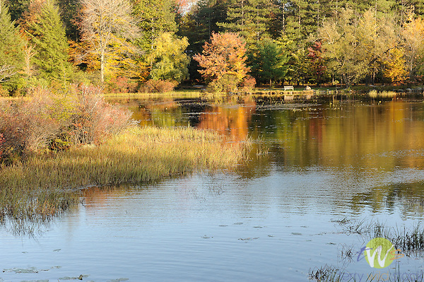 Outlet Pond and bench in Autumn.