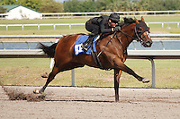 #102Fasig-Tipton Florida Sale,Under Tack Show. Palm Meadows Florida 03-23-2012 Arron Haggart/Eclipse Sportswire.
