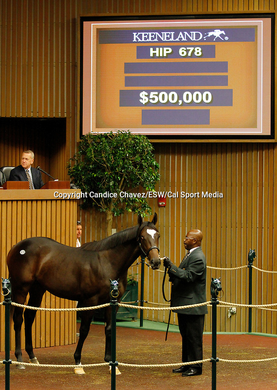 September 16, 2015: Hip 678 Medaglia d'oro - Summer Soiree colt consigned by Eaton Sales.  Candice Chavez/ESW/CSM