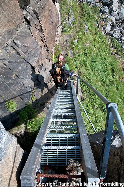 Dame med ryggsekk klatrer stige på fyrvokterveien på Tarhalsen, Sørøya. ---- Woman climbing ladder on Sørøya.