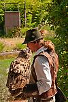 Eagle Owl at the Locarno Bird Show, Falconry Show (Falconeria Locarno)