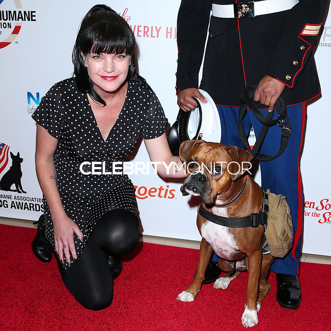BEVERLY HILLS, CA, USA - SEPTEMBER 27: Actress Pauley Perrette arrives at the 4th Annual American Humane Association Hero Dog Awards held at the Beverly Hilton Hotel on September 27, 2014 in Beverly Hills, California, United States. (Photo by Xavier Collin/Celebrity Monitor)