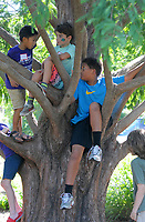 NWA Democrat-Gazette/DAVID GOTTSCHALK Jayden Seo (from left), 5, Grady Sanford, 8, and Charles Carey, 11, discuss Friday, August 3, 2018, their strategy for Capture the Flag during the city of Fayetteville's Parks and Recreation Department Be Active! Camp Wilson at Wilson Park in Fayetteville. Camp Wilson II is scheduled for next week and for campers five through 15 and will feature sports and recreational activities.