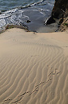 Ano Nuevo State Park, bird tracks in sand, elephant seal