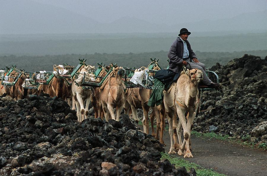 Chameliers vers le village de Yaiza. Ile de Lanzarote.