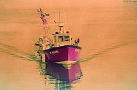 Europe/France/Bretagne/56/Morbihan/Quiberon: bateau de pèche rentrant à Port Haliguen