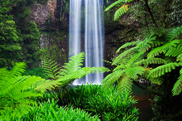 Millaa Millaa Falls on the Atherton Tablelands.  Cairns, Queensland, AUSTRALIA.