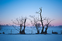 Silhoutette of trees and snow covered field in winter twilight, Brecon Beacons national park, wales