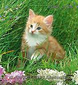 Marek, ANIMALS, REALISTISCHE TIERE, ANIMALES REALISTICOS, cats, photos+++++,PLMP2524,#a#