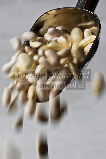 Europe/France/ Midi-Pyrénées/65/ Haute-Pyrénées/Tarbes: Haricots Tarbais, IGP, appelé aussi Haricot Maïs