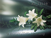 Interlitho, Helga, SYMPATHY, photos, 3 white lilies(KL16109,#T#) Beileid, condolación