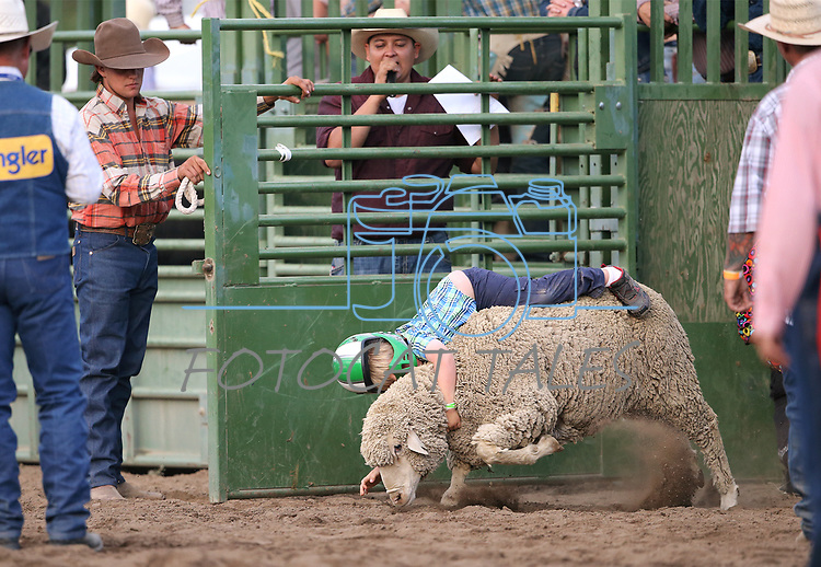 Matthew Warner competes in the Mutton Busting event at the 5th Annual Carson City Bulls, Broncs & Barrels event at Fuji Park, in Carson City, Nev., on Saturday, July 29, 2017. <br /> Photo by Cathleen Allison/Nevada Photo Source