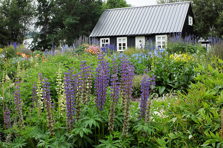 Exterior view of blooming flower gardens and Eyrarlandsstofa house, Akureyri Botanical Garden, North Iceland, Iceland