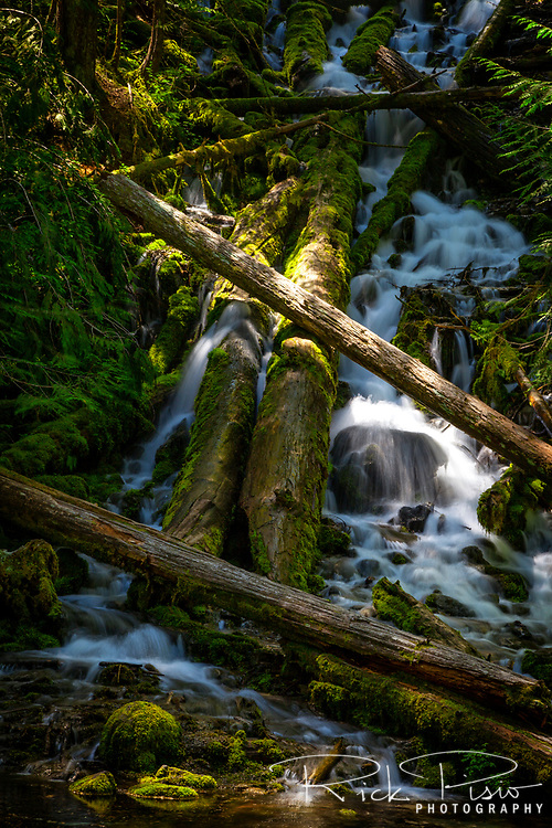 Upper Proxy Falls in Oregon's Three Sisters Wilderness