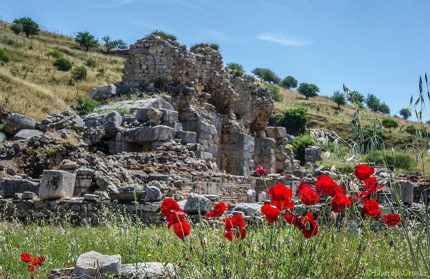 Fine Art Landscape Photograph. Beautiful translucent red Poppy flowers line the ancient ruins of Ephesus in Kusadasi, Turkey.