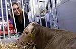 Foto: VidiPhoto<br /> <br /> GORINCHEM - Uit het hele land en België trokken duizenden agrariërs, studenten en andere belangstellenden uit de agrarische sector dinsdag naar Gorinchem voor de jaarlijkse rundvee & mechanisatie vakdagen. Ditmaal niet alleen om kennis te maken met de nieuwste landbouwmachines, producten en ontwikkelingen rond fosfaatreductie, maar ook om elkaar moed in te spreken vanwege de laatste maatregelen van het kabinet rond de stikstofproblematiek. Er wordt daarom ook extra drukte verwacht. De agrarische beurs is bij uitstek de plek om collega's te ontmoeten, een hapje te eten en bij te praten. De vakbeurs duurt tot en met 28 november en is met zo'n 18.000 bezoekers de grootste op dit gebied in Nederland.