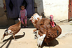 A girl sit in front of turkeys at a street in Khan Younis in the southern Gaza Strip, May 5, 2015. Photo by Abed Rahim Khatib