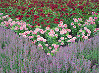 Flower beds at Oregon Garden, Silverton, Oregon