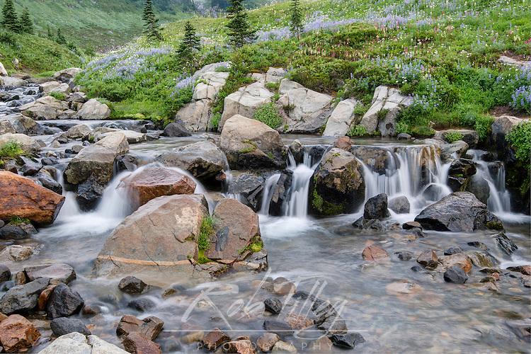 USA, WA, Mt. Rainier NP, Wildflowers at Edith Creek