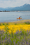 Kayaking along the west shore of Lake Tahoe with lupin fields and kayak