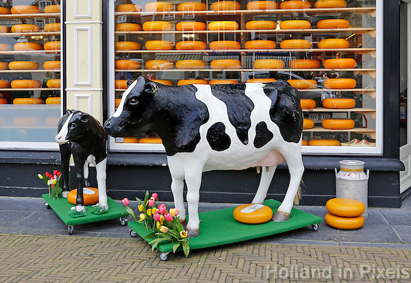 Delft-  Een koe en een kalfje staan voor een winkel waar kaas verkocht wordt