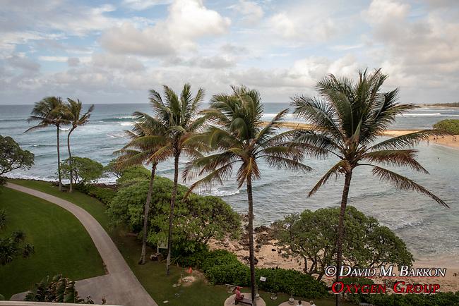 Turtle Bay Hotel Beach