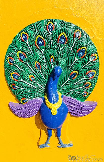 Peacock on the outer wall of Sri Siva Subramaniya Temple in Nadi, Fiji Islands