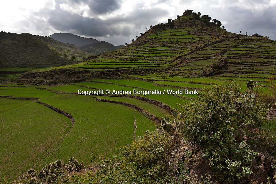 Ethiopia, Tigray region, Rayazebo District. This mountain was terraced to prevent erosion and to reclaim the land for agriculture.