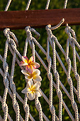 Mauritius. Frangipani flowers threaded in hammock strings.