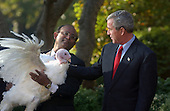 """United States President George W. Bush grants a Presidential Pardon to """"Biscuits"""" the Turkey in the Rose Garden at the White House on November 17, 2004.  This is an annual White House tradition celebrating the national holiday of Thanksgiving.  """"Biscuits"""" was provided by the National Turkey Federation, and was raised by Kevin Foltz and his family on their farm in Mathias, West Virginia.<br /> Credit: Ron Sachs / CNP"""