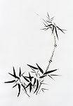 bamboo stalk with young leaves, beautiful Japanese Zen painting Sumi-e, oriental black ink on rice paper illustration fine artwork.