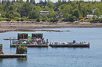 Lobster traps are pictured on docks in the harbor of Tremont, Maine Wednesday June 19, 2013. Located on Mount Desert Island, Tremont primary industry is fishing, mainly lobster.