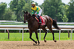 Irad Ortiz Jr. on Fresco trained by Christophe Clement in the $100,000 New York Stallion Series