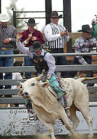 28 August 2005: Wyatt Welsh riding the bull Silver Machine holds on during the Extreme Bulls competition Sunday at the Kitsap County Fair Grounds is slammed into the fence, Welsh scored 90 points in the first round of competition in Bremerton, WA.