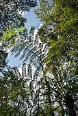 Fazenda Bauplatz, Parana State, Brazil. Tree fern and other trees.
