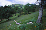 Sunol Region Wilderness
