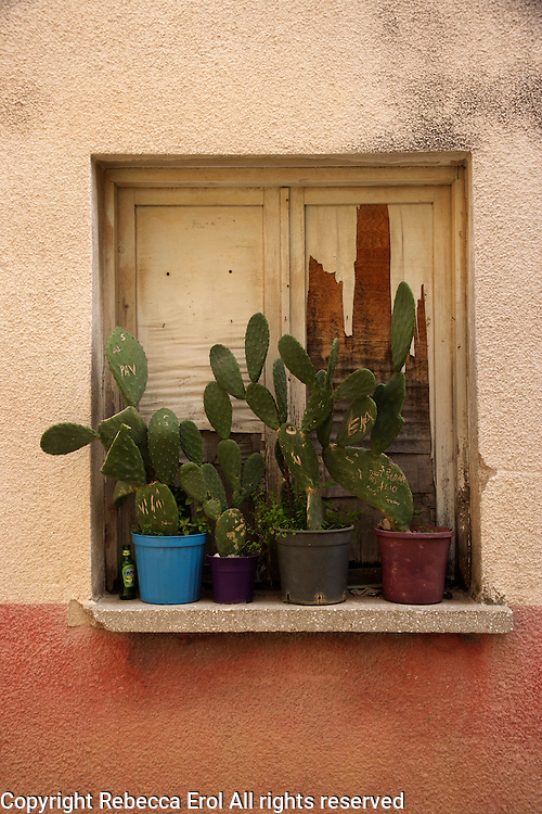 Cactus display in Alacati, Turkey